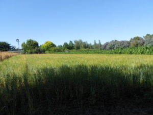 Crops On Our Farm